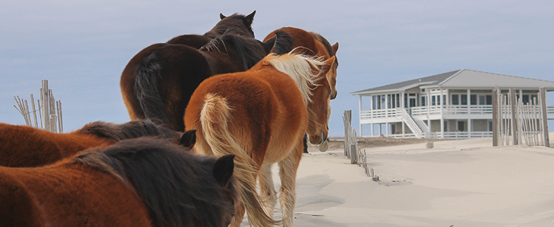 horse tours in corolla, nc